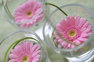 Pictures of gerber daisy wedding bouquets lovetoknow junglespirit Gallery