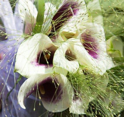 https://cf.ltkcdn.net/weddings/images/slide/106827-424x400-purple3.jpg