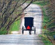 Amishbuggy.jpg