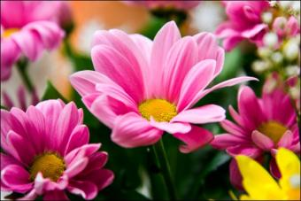 Fresh Floral Bridal Bouquets