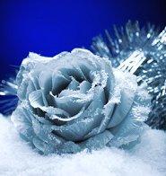 A frozen rose for a winter wedding