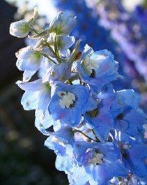 https://cf.ltkcdn.net/weddings/images/slide/105959-211x265-blueflower6.jpg