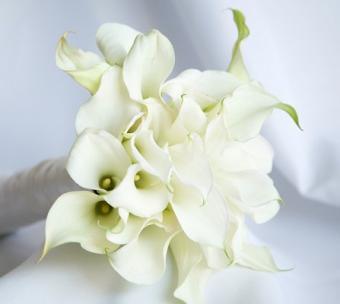 https://cf.ltkcdn.net/weddings/images/slide/106945-447x400-whiteflower2.jpg
