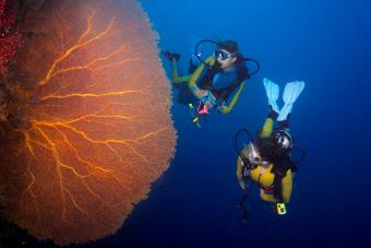 scuba divers in coral reef