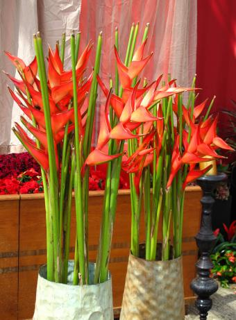 https://cf.ltkcdn.net/weddings/images/slide/238481-850x1154-Tall-heliconia.jpg