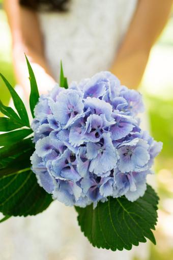 Bride holding blue hydrangea wedding bouquet