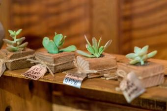 Succulent in holder wedding favors