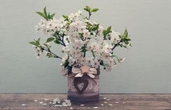 Branchs of Wild Cherry blossoms
