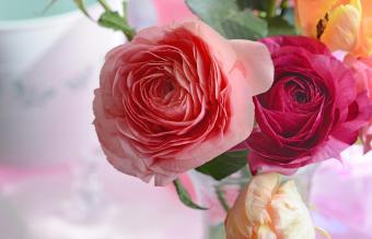 Ranunculus blooms