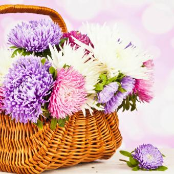 asters and spider flowers