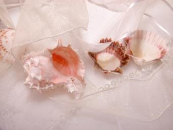 shell decorations