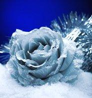 A frozen rose for a winter wedding