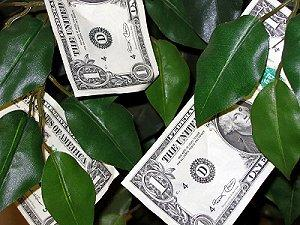 Wedding money tree with dollars attached