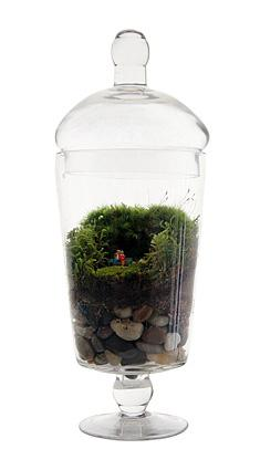 Grow Old With You Terrarium from Uncommon Goods