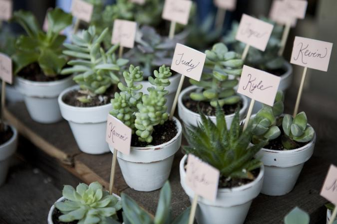Potted succulent shower favors