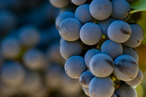 Wine_Making_0.jpg