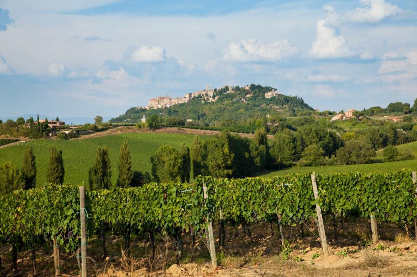 Italian-vineyard.jpg