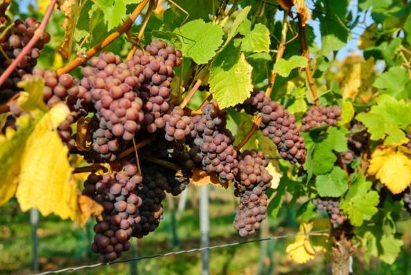 https://cf.ltkcdn.net/wine/images/slide/112448-593x397-Interesting-Wine-1.jpg