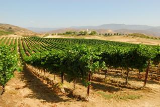Overview of Wilson Creek Winery in Temecula, California