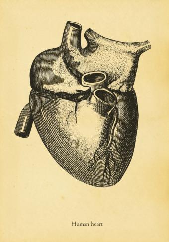 https://cf.ltkcdn.net/wine/images/slide/112366-578x830-Heart-Health.jpg