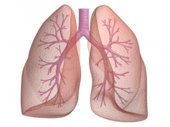 https://cf.ltkcdn.net/wine/images/slide/112368-800x600-Lungs.jpg