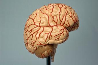https://cf.ltkcdn.net/wine/images/slide/112370-850x565-Brain.jpg