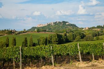 https://cf.ltkcdn.net/wine/images/slide/131100-849x565r1-Italian-vineyard.jpg