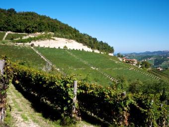 https://cf.ltkcdn.net/wine/images/slide/131102-800x600r1-Nebbiolo-Piedmont.jpg