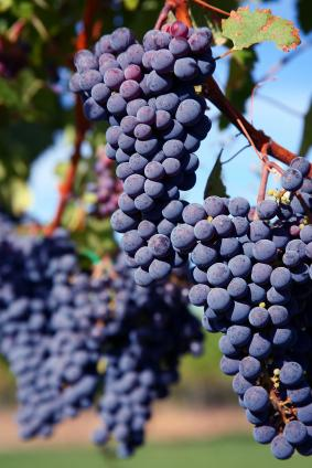 A Tale of Two Stags' Leap Cabernet Sauvignons