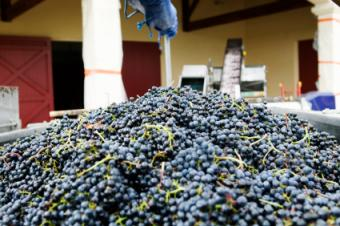 Essential Information About Pomerol Wine