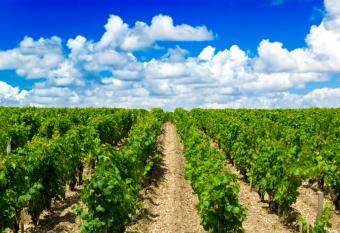 Château Lafite Rothschild World-Class Winery