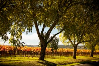 A Closer Look at Sterling Vineyards' Wine