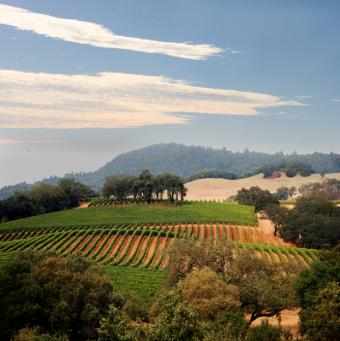 6 Excellent Tips for Planning a Napa Wine Tour