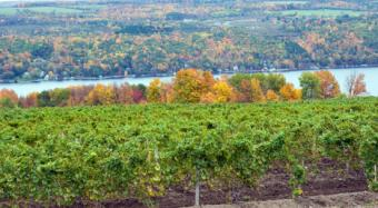 New York State Wines and Wine Ratings