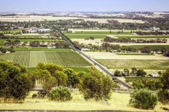 Vineyards in Barossa Valley, Australia