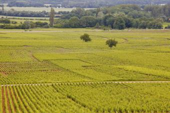 Beaune vineyards; © Julianelliott | Dreamstime.com