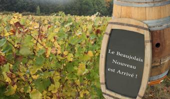Guide to Beaujolais Nouveau Wine