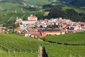 Vineyards in the Barolo region