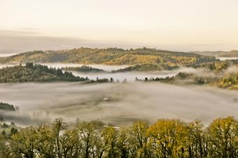 Fog in the Willamette Valley