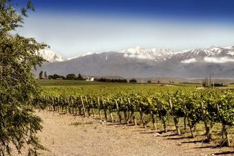 Beautiful springtime at vineyards