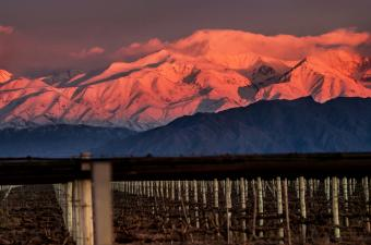 Guide to Argentina's Wine
