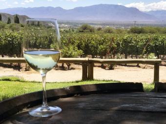 Vineyards in Cafayte, Salta - Argentina
