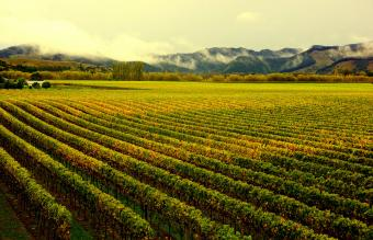 Vineyards during Autumn