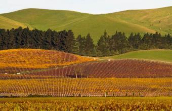 Waipara vineyard Marlborough