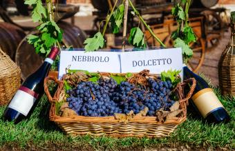 Bottles and grapes of nebbiolo and dolcetto wine