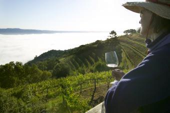 Planning a Wine Tasting Weekend in Napa Valley