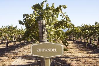 Zinfandel Sign in Vineyard