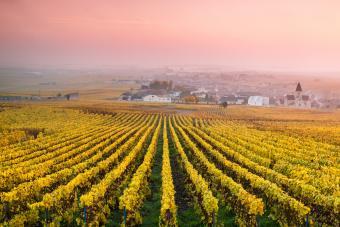 https://cf.ltkcdn.net/wine/images/slide/250471-850x567-champagne-vineyard.jpg