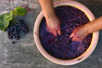 Step-by-Step Winemaking Process for Beginners