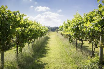 Guide to Boordy Vineyards and Winery